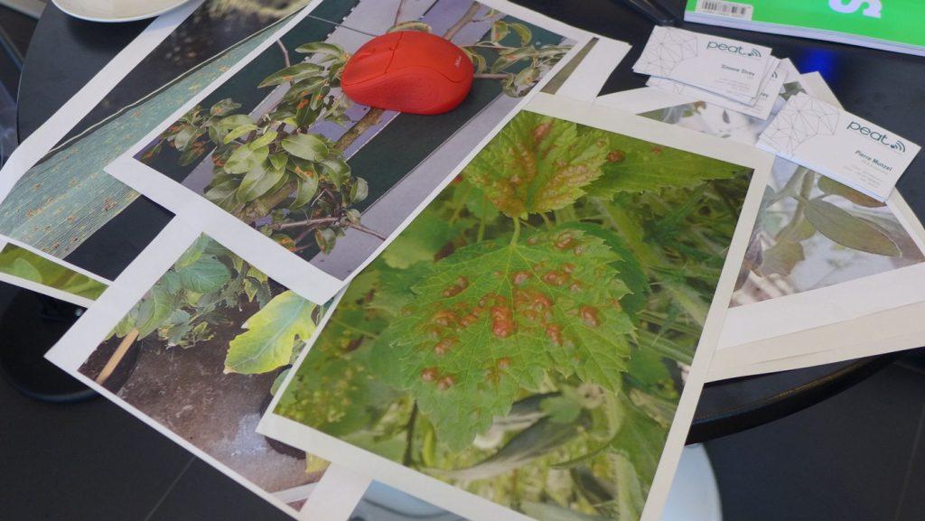Obrázek: Škůdci a choroby rostlin - jak zjistit, co se děje na vaší zahradě? Zkuste aplikaci Plantix