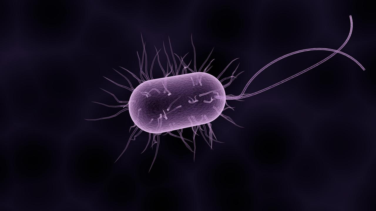 Obrázek: Bakterie se šíří vzduchem klidně desítky kilometrů, pomáhá jim déšť