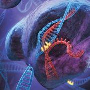 Obrázek: Lidské buňky se dají programovat jako počítače. Pomohou při diagnostice i léčení