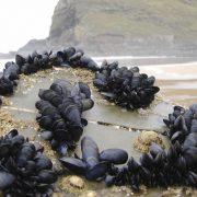 Obrázek: Lepidlo inspirované korýši dokáže slepovat věci pod vodou