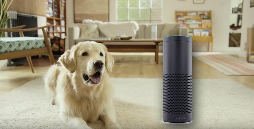Obrázek: Amazon Petlexa - první umělá inteligence, která rozumí řeči zvířat