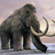 Obrázek: Klonování mamuta ohrožuje mutace genů. Cesta by mohla být v křížení druhů