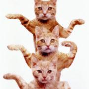 Obrázek: Jak jsme zkrotili kočky? Nijak, ony si zřejmě vybraly nás