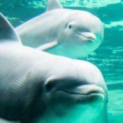 Obrázek: Delfíní útok aneb jak lze telefony i celé domácnosti ovládat neslyšitelnými zvuky