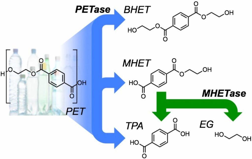 Obrázek: Našel se enzym požírající plasty, objeven byl náhodou