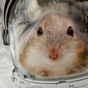 Obrázek: Obrovský skok pro myš, důležitý krok pro člověka: 20 myších astronautů pomáhá zjistit, zda přežijeme na Marsu