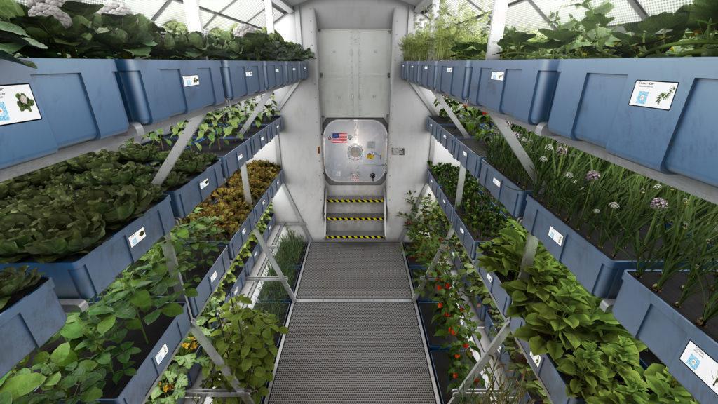 Obrázek: NASA pěstuje rostlinu s příchutí steaku, určena je astronautům k letu na Mars