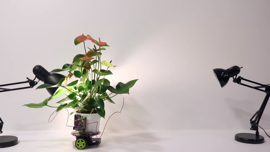 Obrázek: Vědci udělali z rostliny robota: Sama se pohybuje za světlem