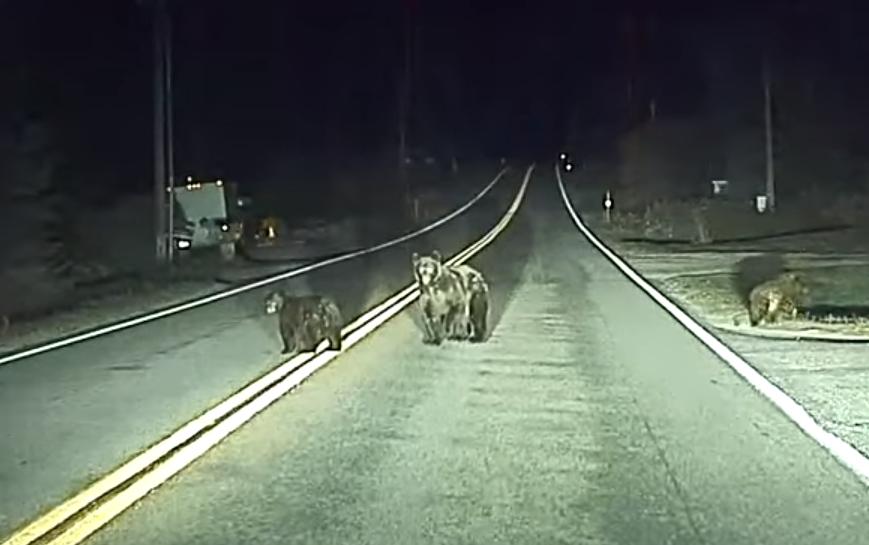 Obrázek: Autopilot Tesly zachránil medvědí rodinku přecházející silnici ve tmě