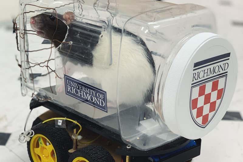 Obrázek: Myši se naučily řídit: Podle vědců preferují řízení automobilu před autopilotem