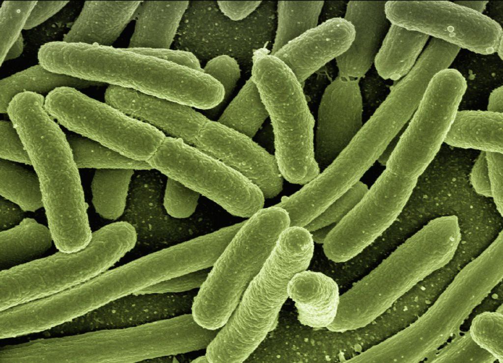 Obrázek: Umělá inteligence objevila antibiotikum schopné zabíjet rezistentní bakterie