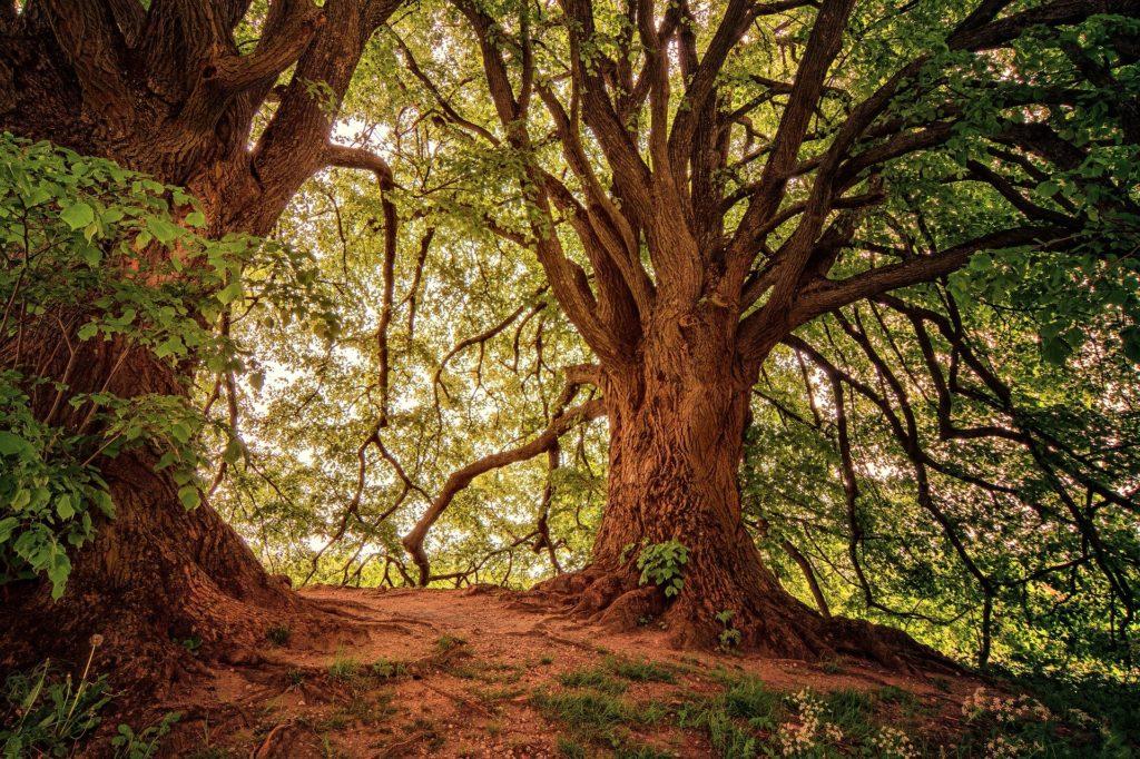 Obrázek: Sázení stromů je nový hit miliardářů a celebrit, ale pozor na důsledky