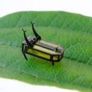 Obrázek: Robotický brouk bez baterie? Jde to, ale ne bezchybně
