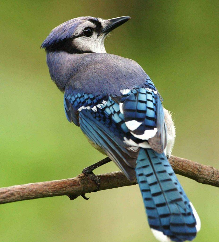 Obrázek: Jak se ptáci udržují vkondici? Cvičí a drží dietu