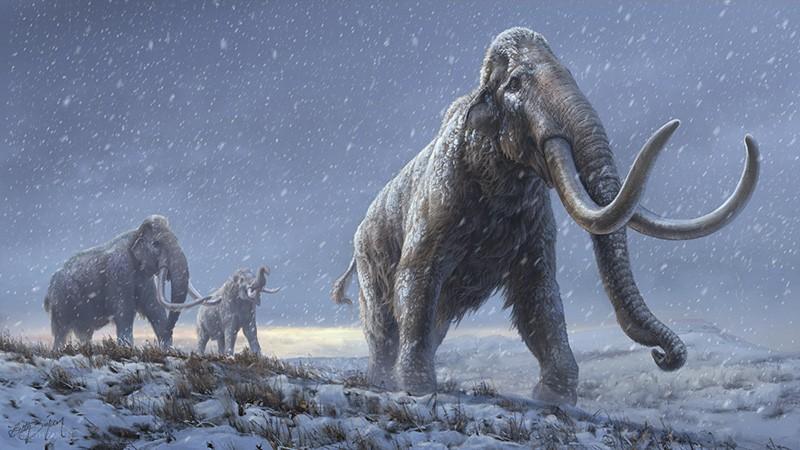 Obrázek: Nejstarší DNA v historii rozluštěna: Milion let starý mamutí zub vydal své tajemství