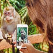 Obrázek: Opice hraje videohru pomocí mozku: Elon Musk ukazuje další vývoj Neuralinku