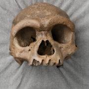 Obrázek: Nový člověk z Číny? Dračí muž byl podobnější Homo sapiens než Neandrtálcům